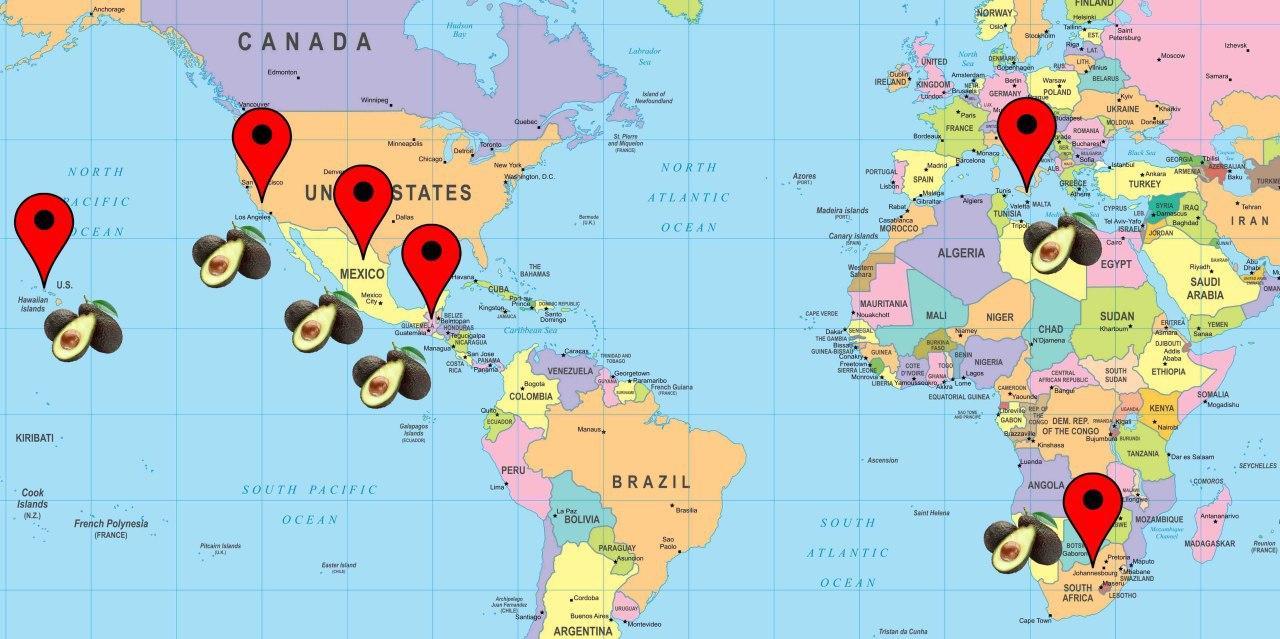 mappa avocado siciliano